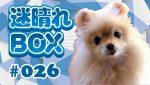 """【BOX#26】相場の本質をとらえる""""空間認識力""""を鍛える。(迷晴れFX)"""